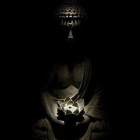Sunny Lotus