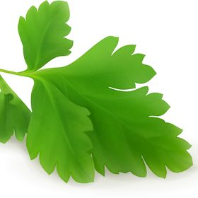 Flat Leaf Parsley  & Healthetarians