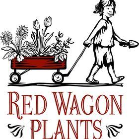 Red Wagon Plants