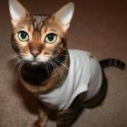 Flamin Cat Design