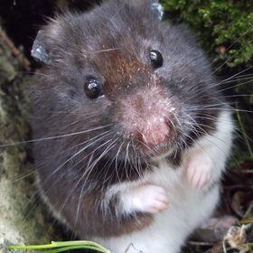 I ♥ Hamsters