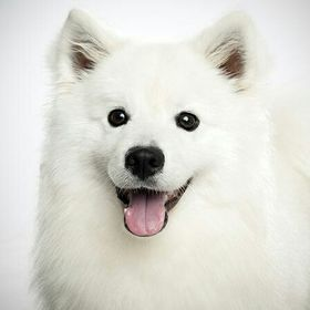 Blogger Dog