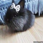 Baby Boo Boo Bunny
