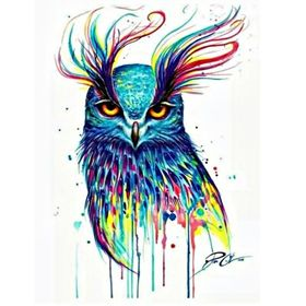 Night Colourful Owl