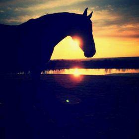 Pat_Horse