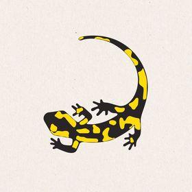 Salamander Naturgarten