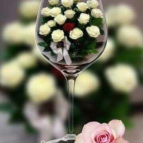 iv růž