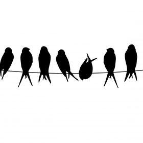Blog Naturaleza a Vista de Pájaro