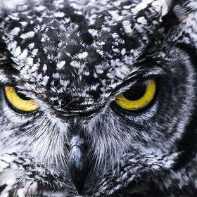 owlees