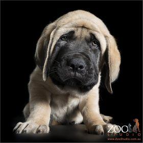 Zoo Studio Animal Art Photography