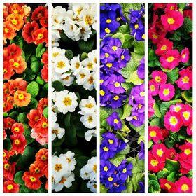 Kartepe Çiçekçilik