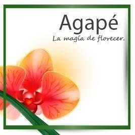 AGAPÉ LA MAGIA DE FLORECER