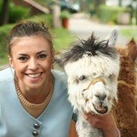 Alpakoterapia Karolina Grys