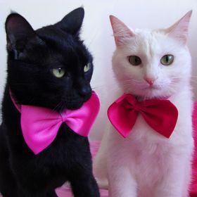 Morgana & Margot MM.Kittens