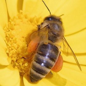 Central Oregon Beekeeping Association