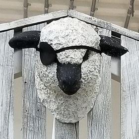 Black Sheep Vintage