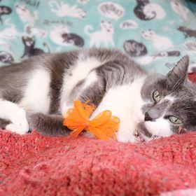 Oddball Cat Toys/Spirit Gem Designs
