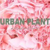 Urban Plant Estudio Floral