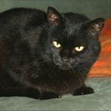 Manu Blackcat