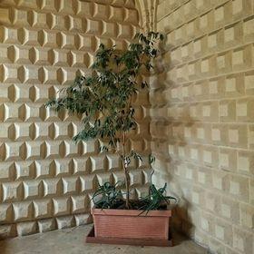 Corner Plant