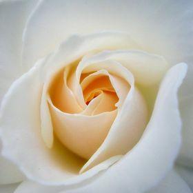 Vanilla Rose Photography