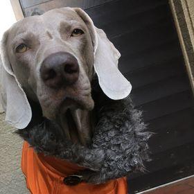 犬服工房R9