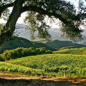 Cocavin Vineyards
