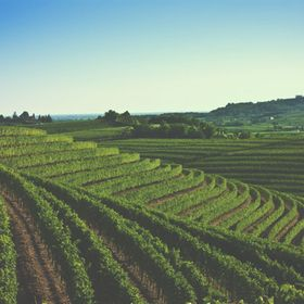 CheCollio.com - finest wines