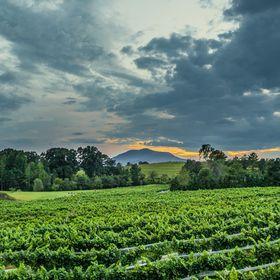 ParkerBinns Vineyard and Winery