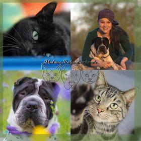 Malous Rabaukenbande - der ehrliche Hunde- und Katzenblog mit Persönlichkeit