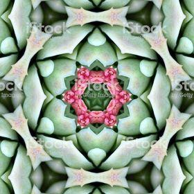 Mandalas Images