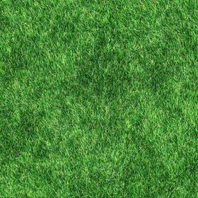 Somos Vida Verde