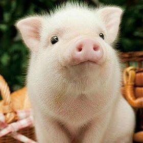 Piggypack