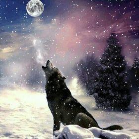 Wolf Bro