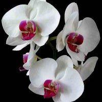 Flower So
