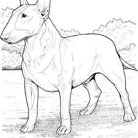 Madera bull terrier-DEKO bricolaje 3-50cm