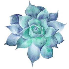 The Succulent Eclectic   Succulent Care and Succulent DIYs
