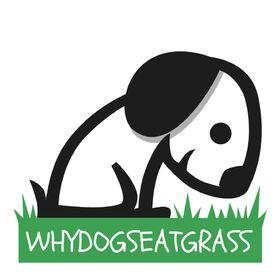 WHYDOGSEATGRASS