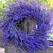 Lavendery .com