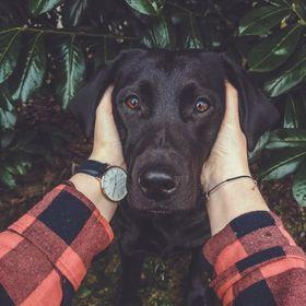 Flummi's Diary   Hundeblog mit DIY, Training, Rezepte & Erziehung
