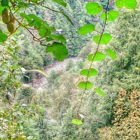 Tuba Bozkan