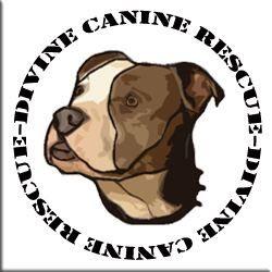 Divine Canine  Rescue