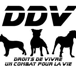 association ddv