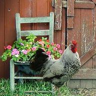 The Primitive Farmhouse ~ Kim Blanton
