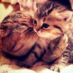Caline Snowcat