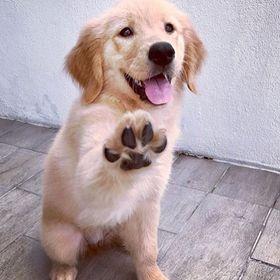 puppyingabuot