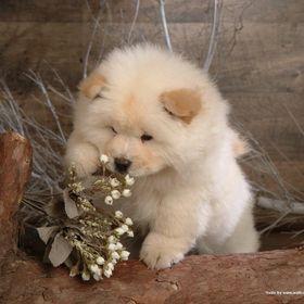 9 Gambar Binatang Anjing Terbaik Anjing Binatang Anak Anjing