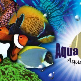 Aqua Dreams Aquarium