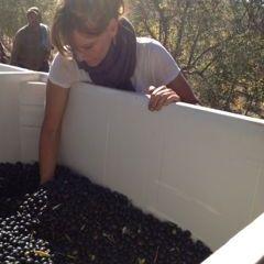 St. Helena Olive Oil Co