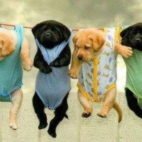 Fun Puppies